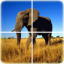 Animal Puzzle by xidea creator app archived