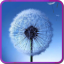 Galaxy S3/S4 Fly Dandelion app archived